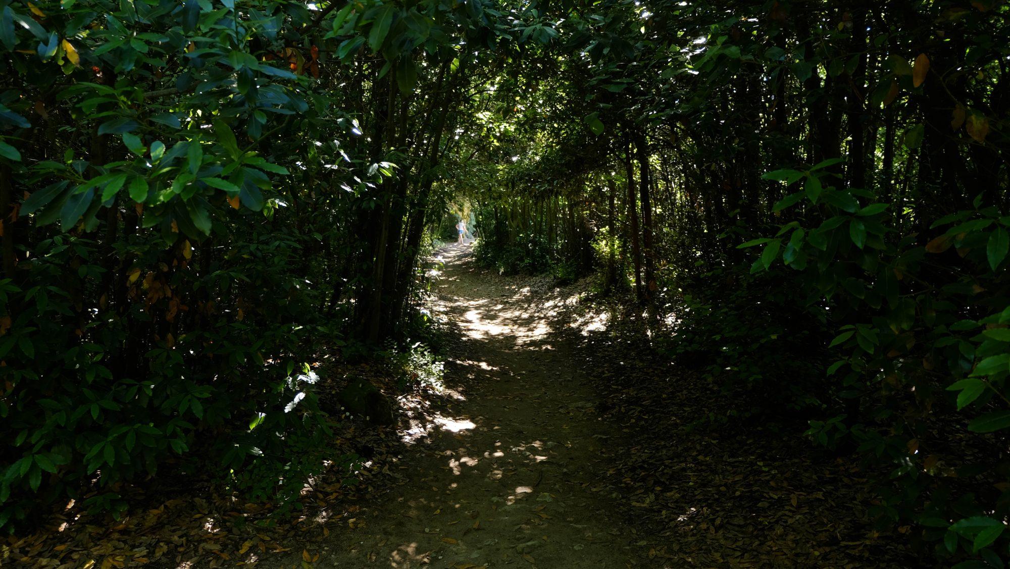 Promenade dans les sous-bois - Saint Clément des Baleines, Ile de Ré