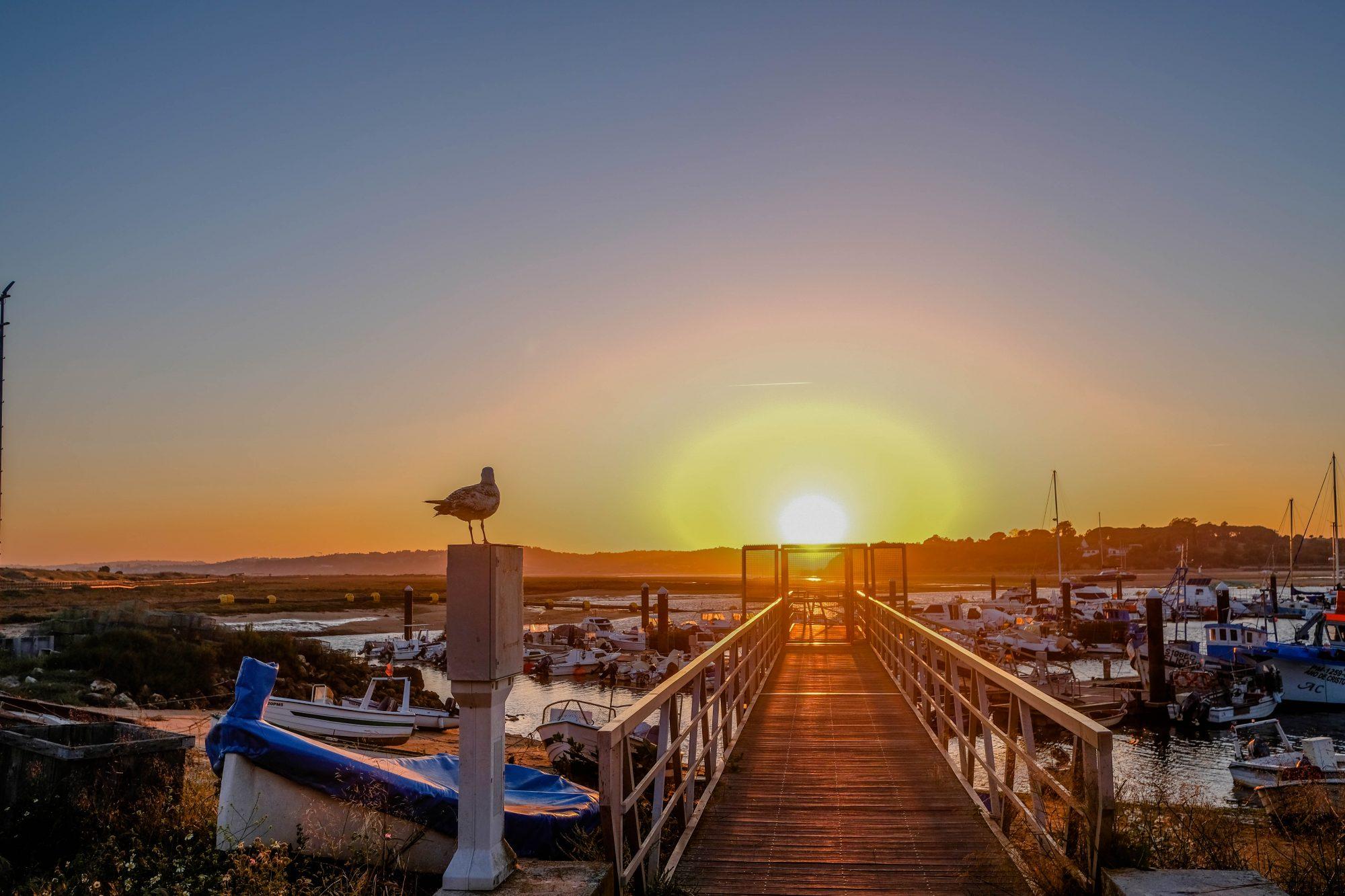 Mouette et soleil - Alvor, Portugal