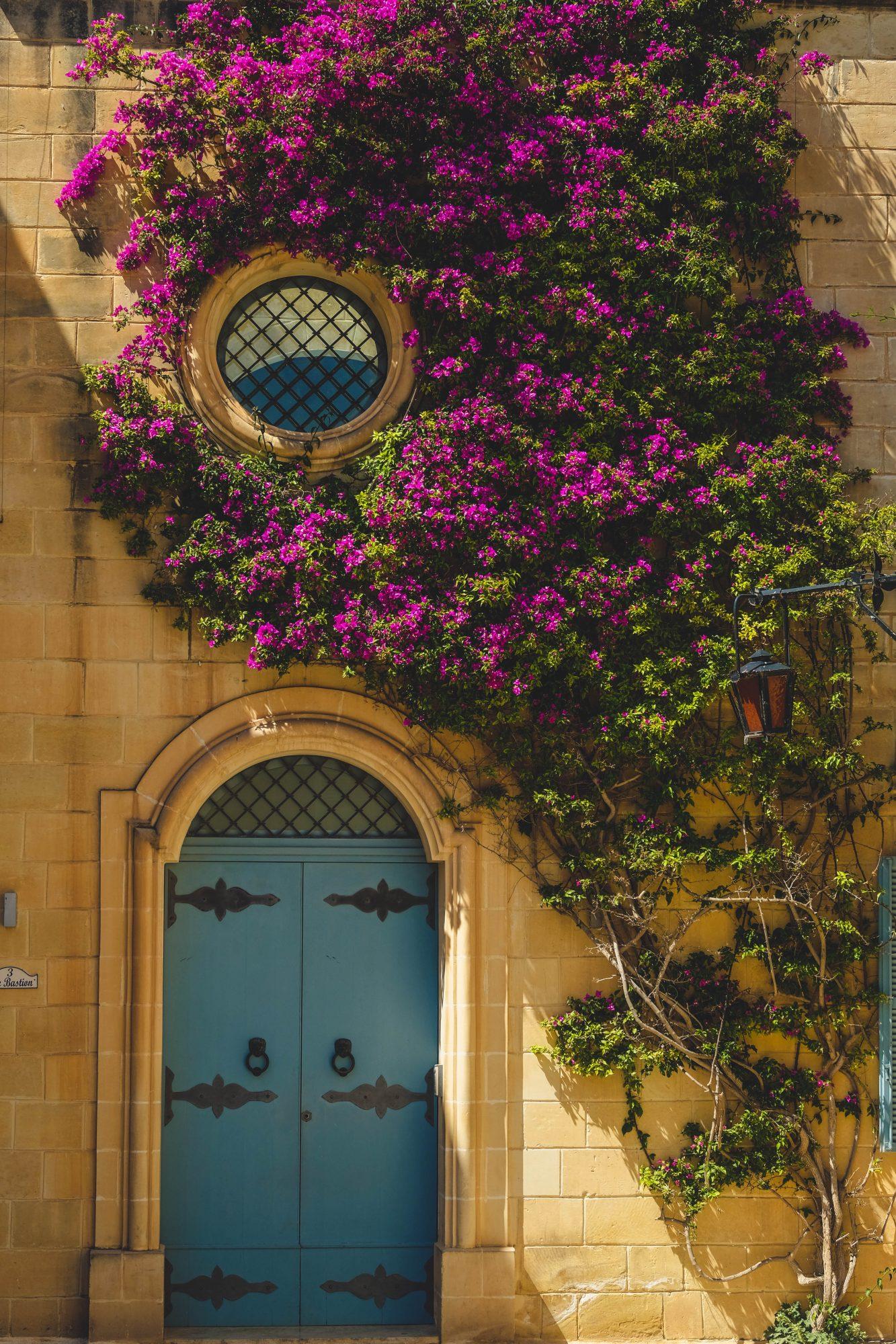 Porte et plante