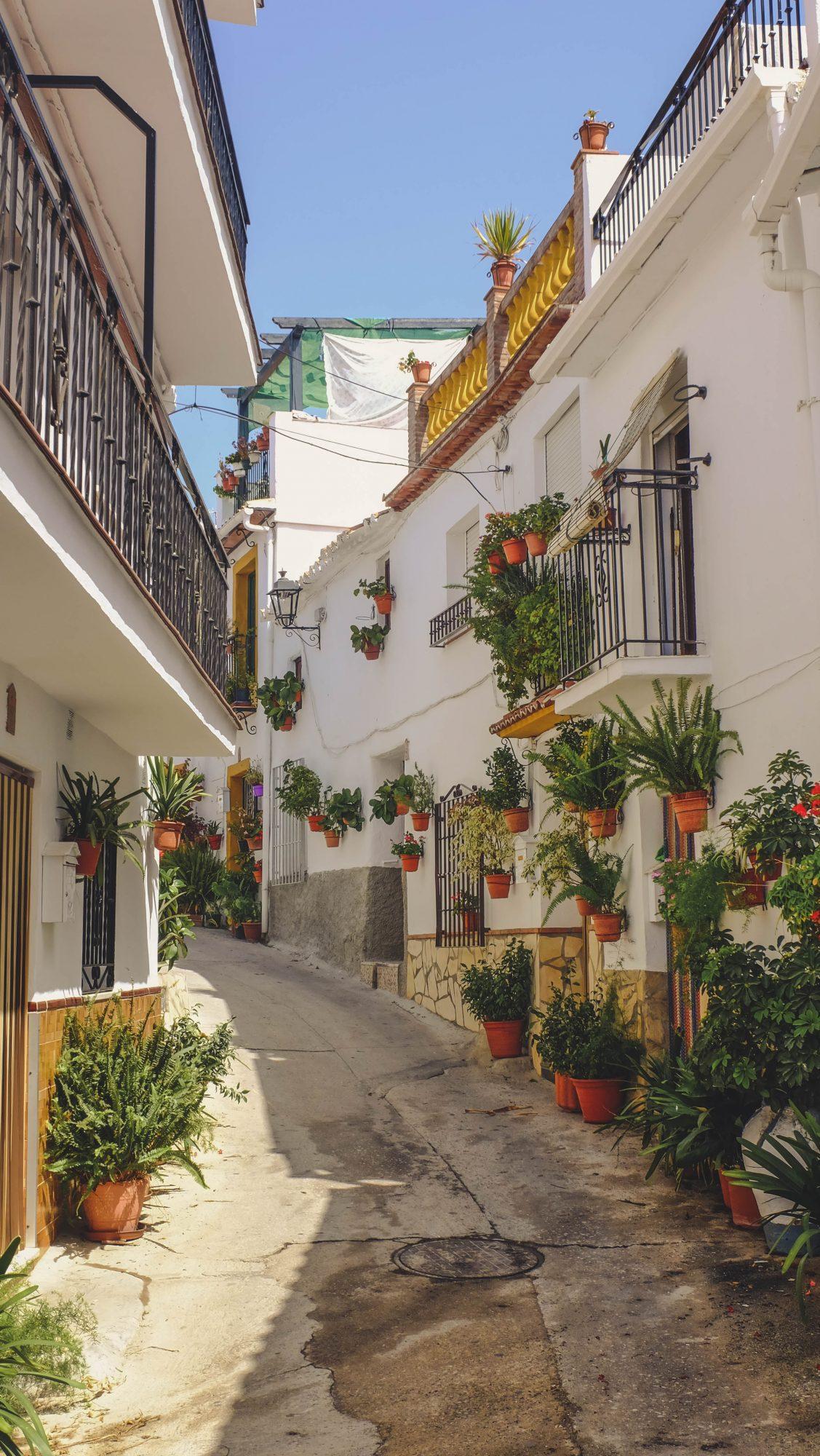 Canillas en fleur - Canillas de Aceituno, Espagne