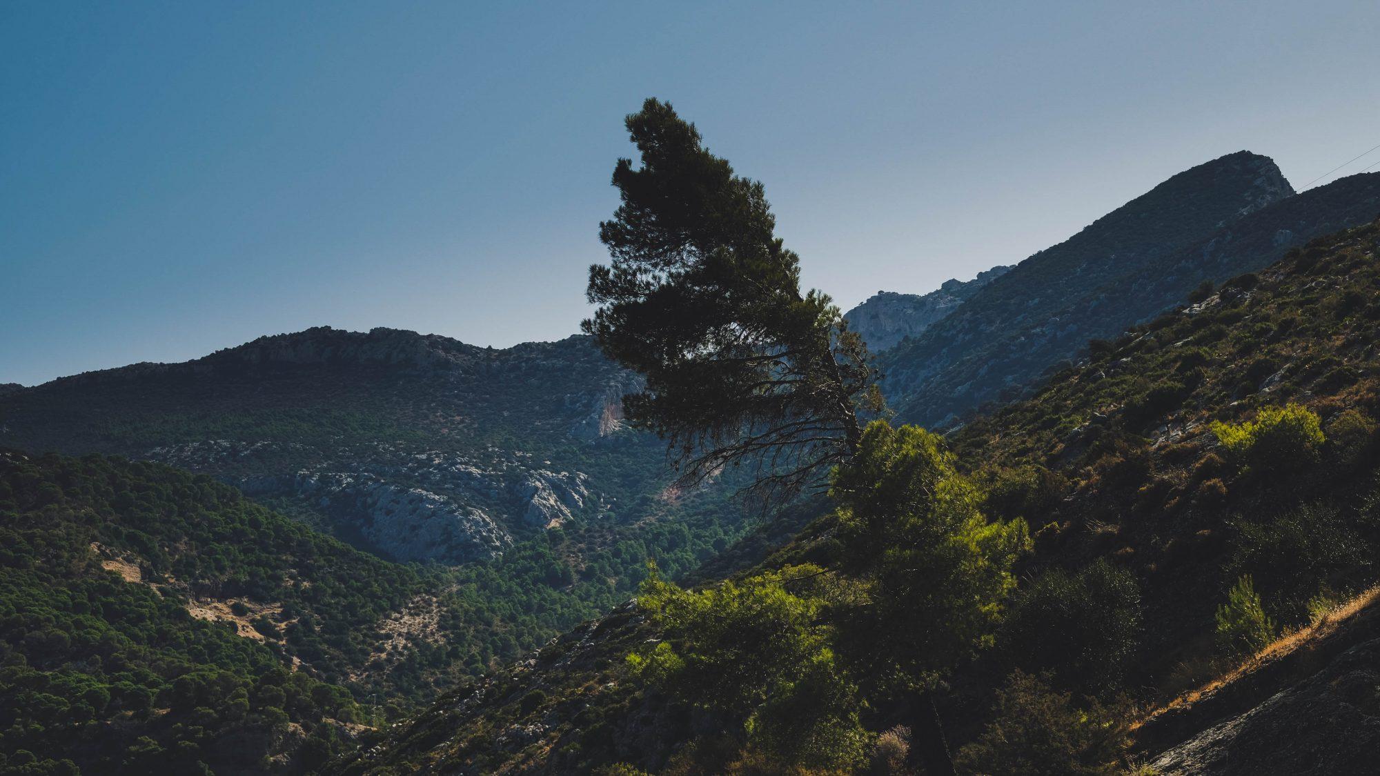 Arbre solitaire - El Chorro, Espagne