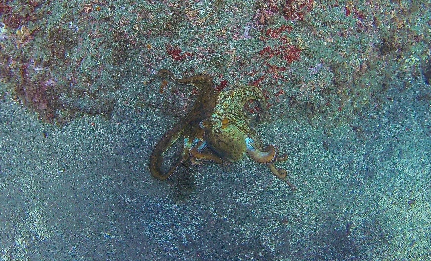 Octopus - Marina del Este, La Herradura, Espagne