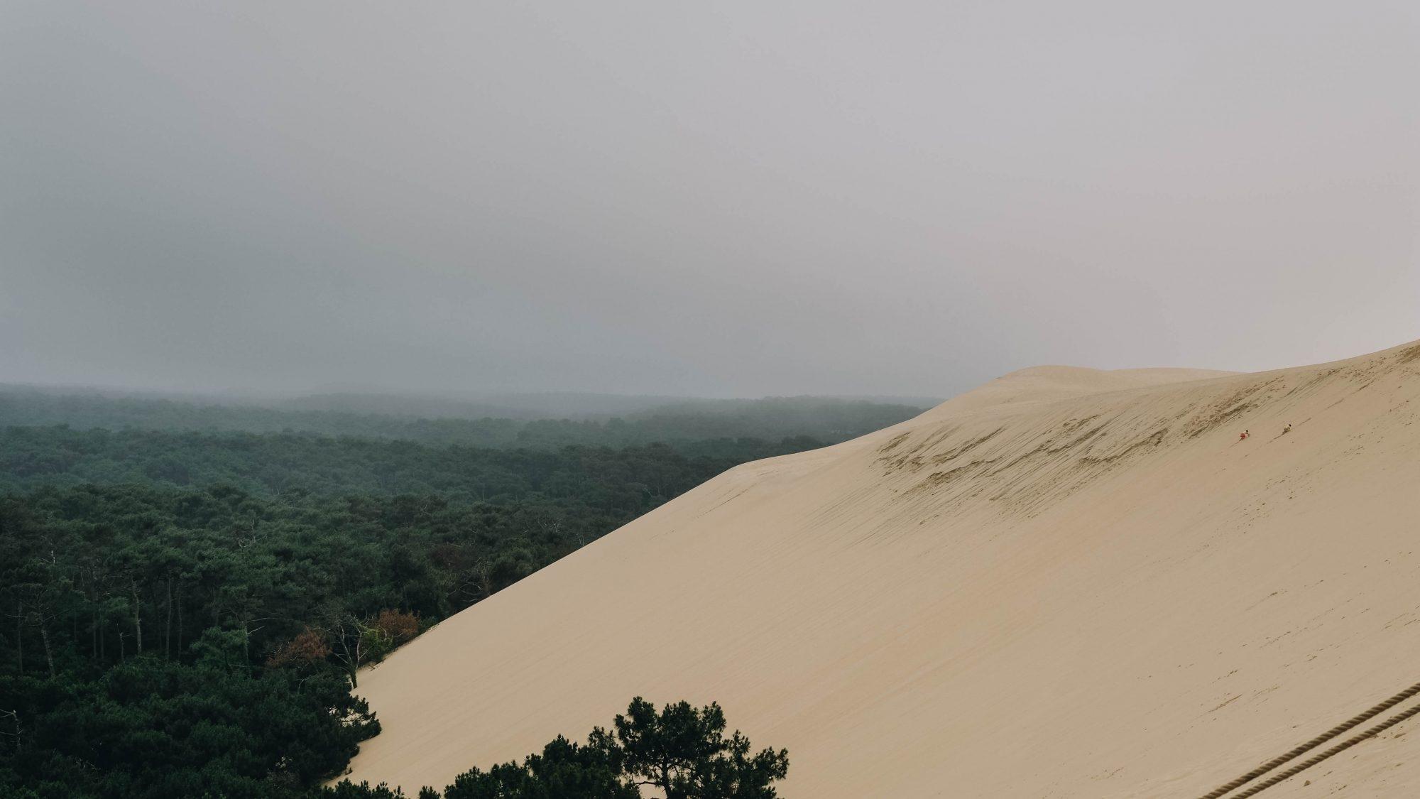 Forêt depuis le haut de la Dune du Pilat