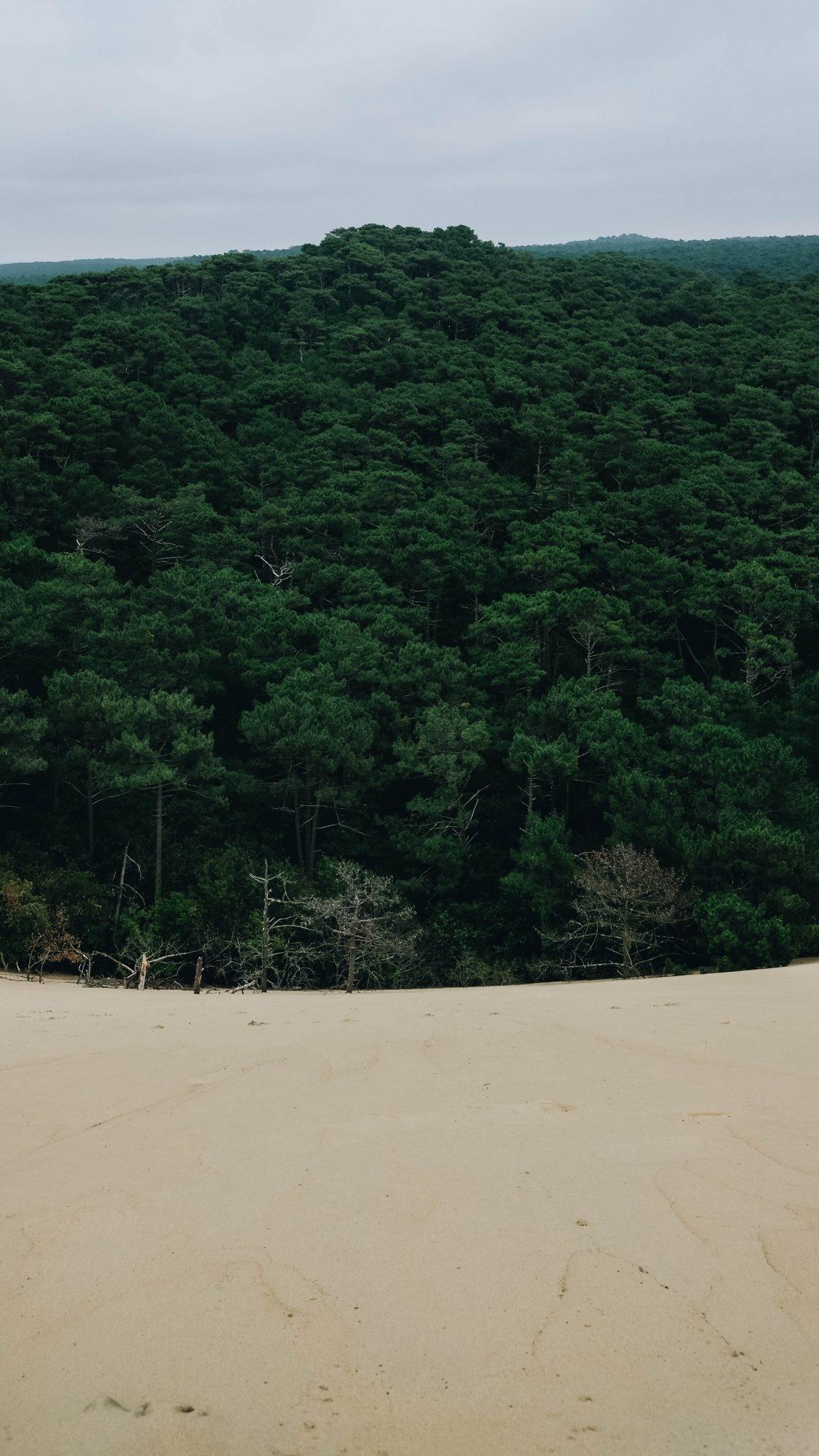 Portrait de la forêt landaise