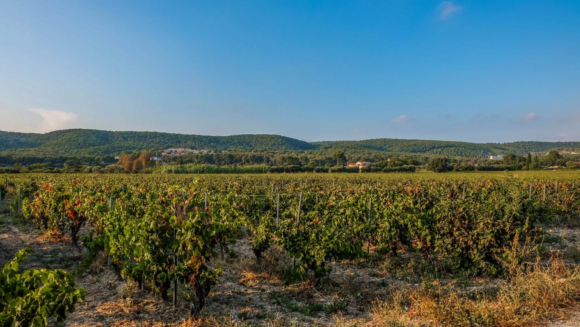 Visiter les vignobles de Cassis