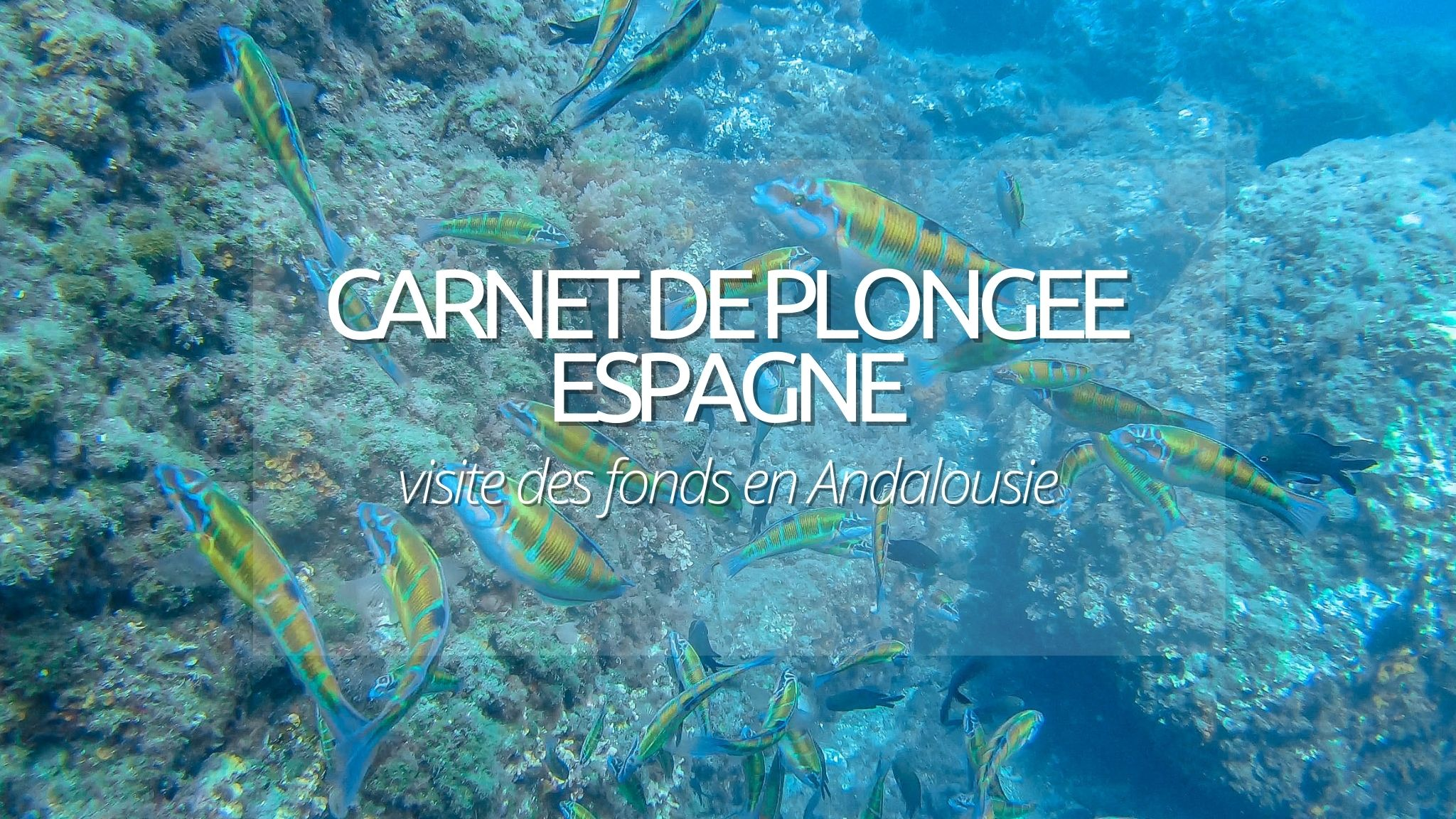 Guide plongée : Costa del Sol en Andalousie