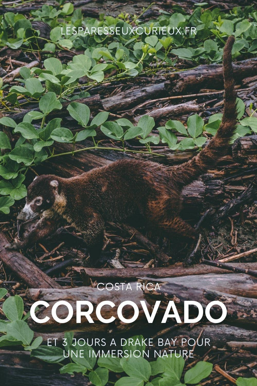 coati au parc national du corcovado pinterest