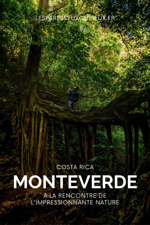 ficus bridge monteverde