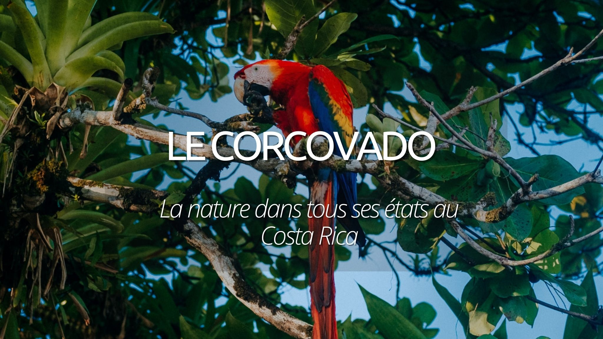 Le parc national du Corcovado au Costa Rica : la nature dans tous ses états