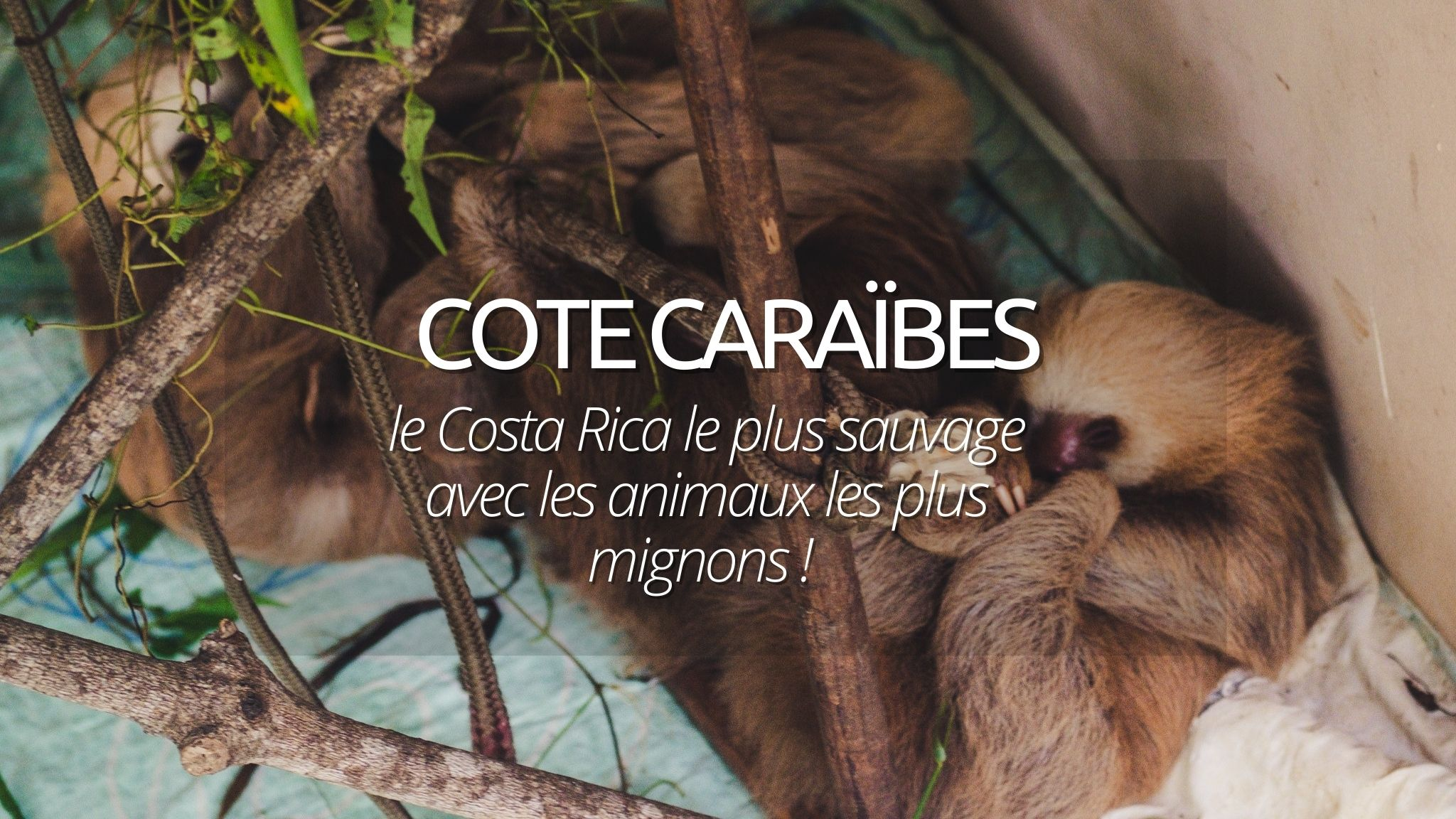 Que faire à Puerto Viejo, Costa Rica ? Bienvenue sur la côte des Caraïbes