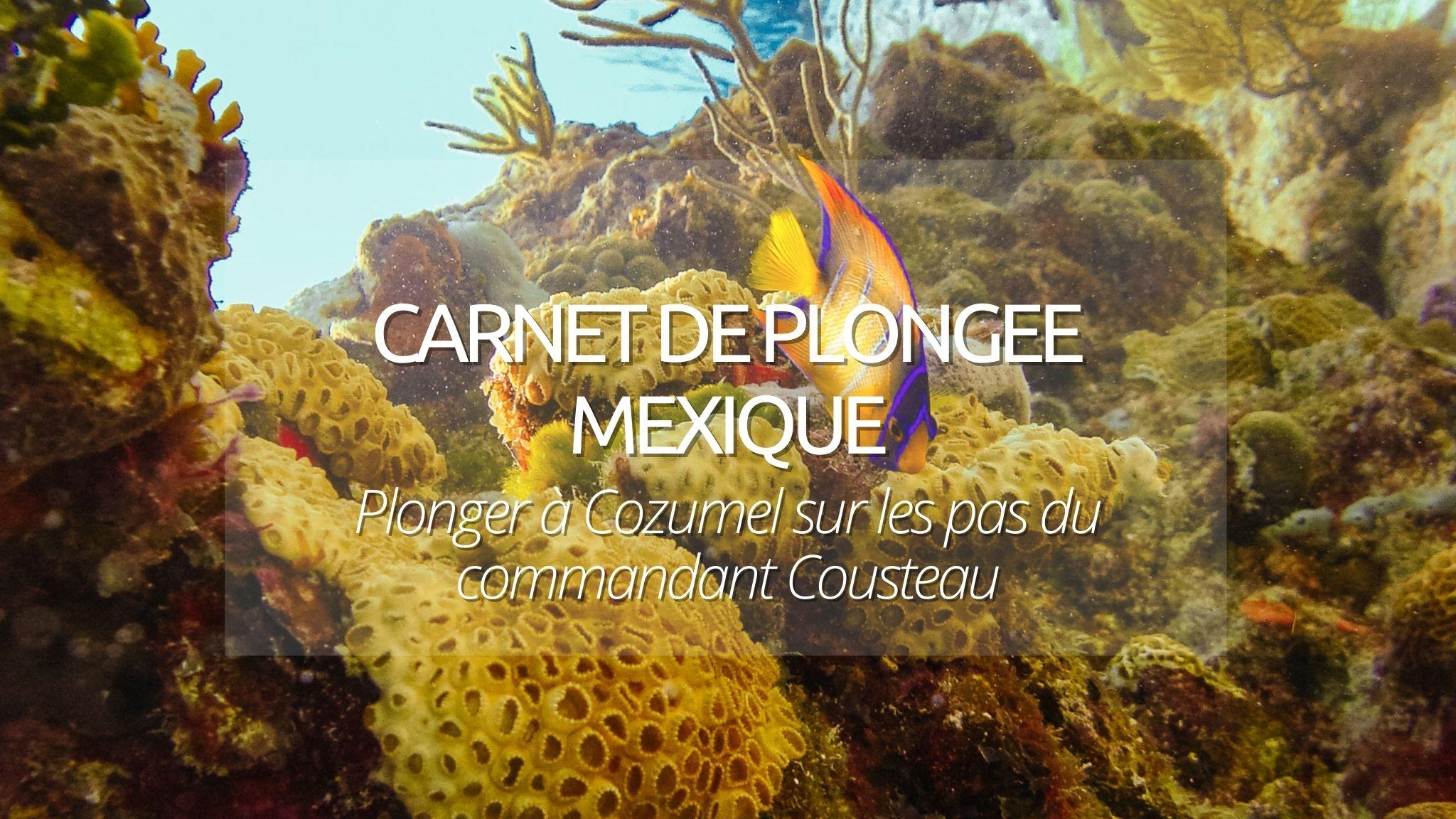 Carnet de plongée Cozumel : notre avis sur les pas du commandant Cousteau